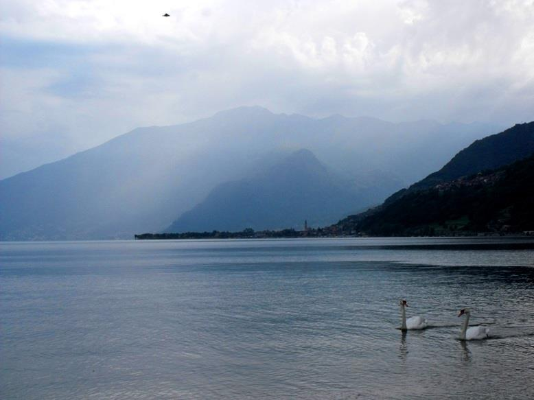 swans on lake como by Nyx Martinez