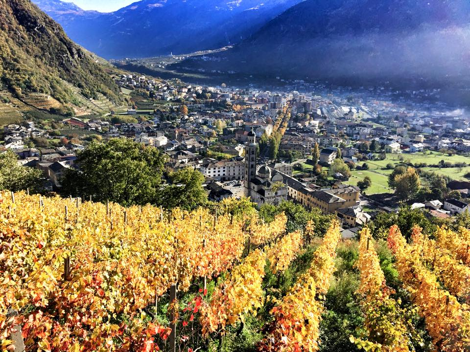 Wine Holidays With Kids! The Valtellina Vineyards